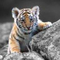 Tigerdrummer